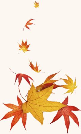 leaves_btm_lft
